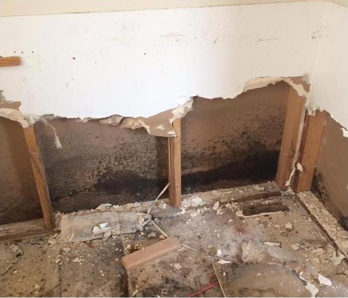 Mold growth found on drywall