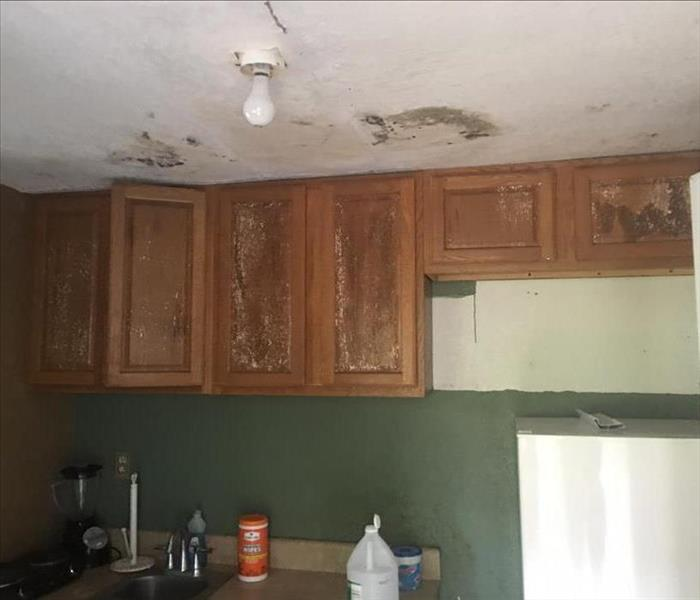 Mold Remediation Breaking the Mold