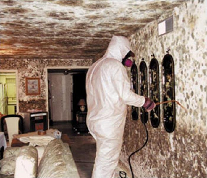 Mold Remediation Questions About Mold Remediation to Consider.