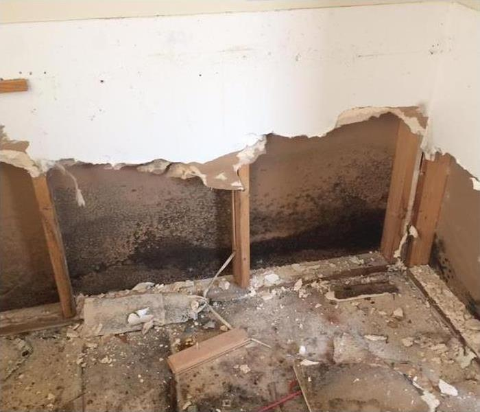Mold  growth behind drywall
